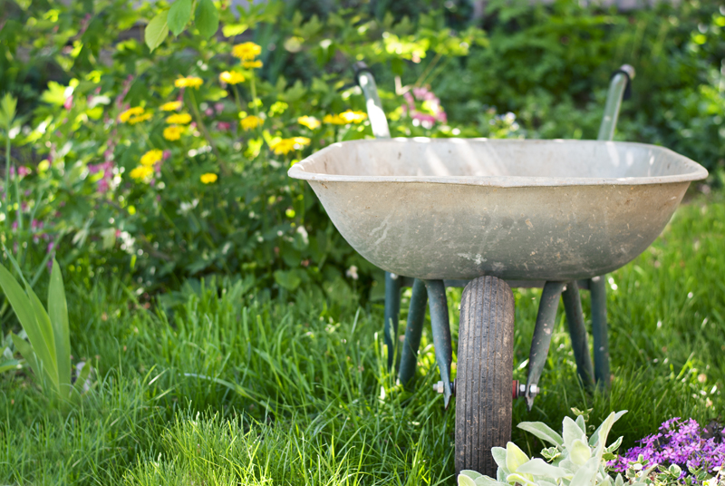 wheelbarrow to work in the garden on a background of green plants